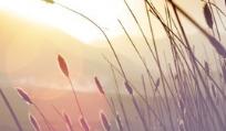 【解读】山东:联合印发通知规范融资平台定向融资行为,政信定融且买且珍惜!
